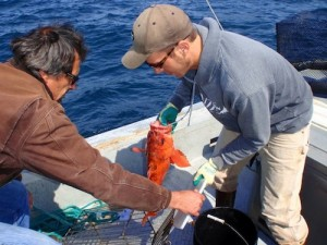 Volunteers with ODFW release rockfish as part of marine reserve monitoring